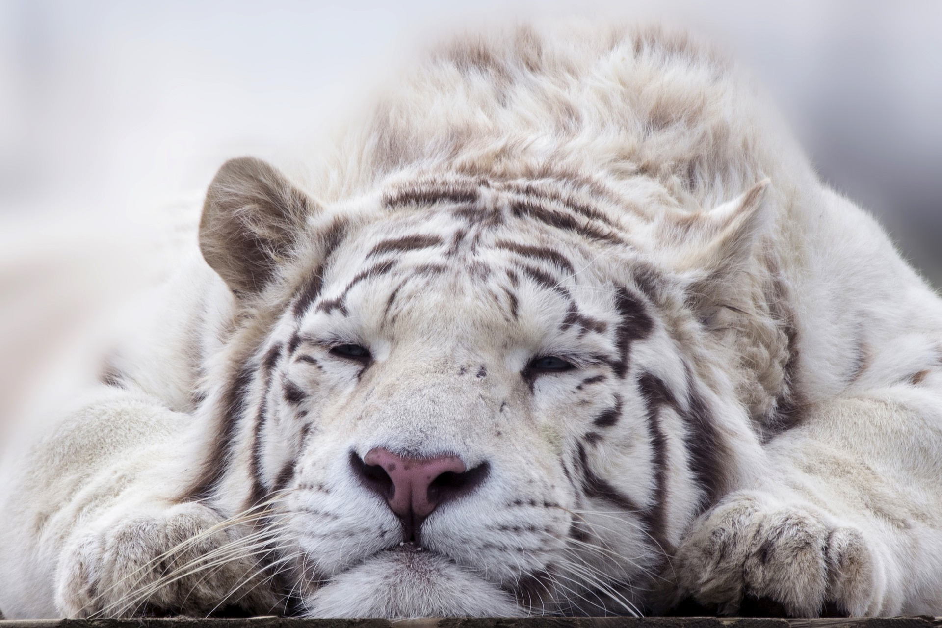 Tigerarbeit